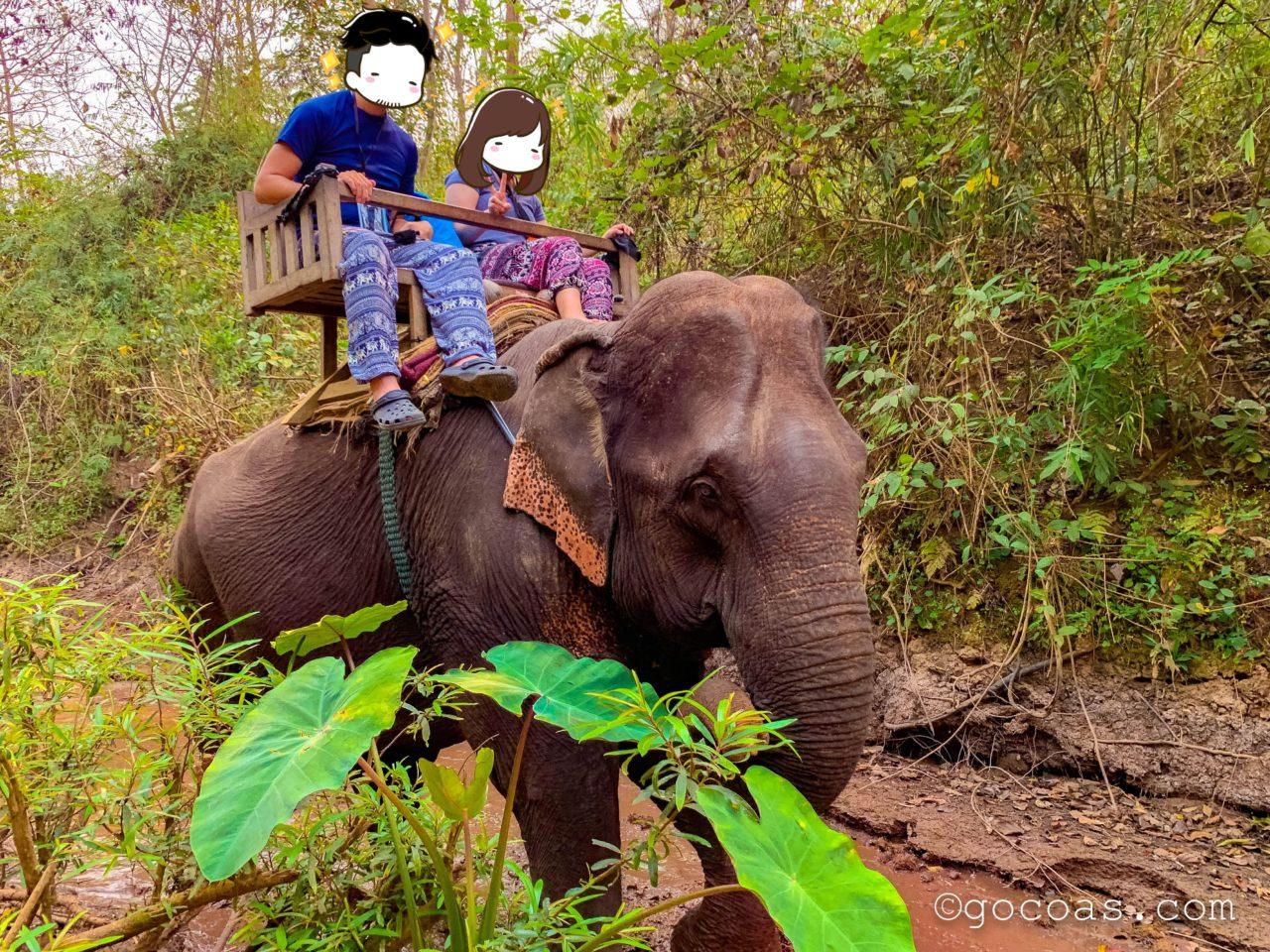象使い体験で象に乗った夫婦2人