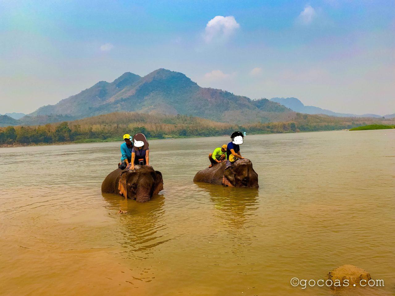 象使い体験で川で象を洗うところ