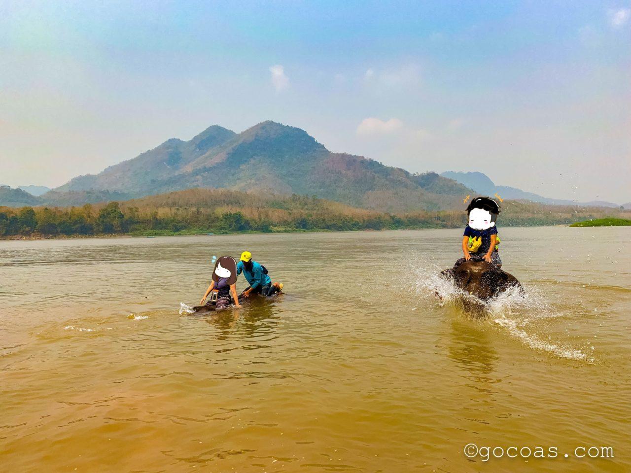 象使い体験で乗ってる象が川に沈むところ