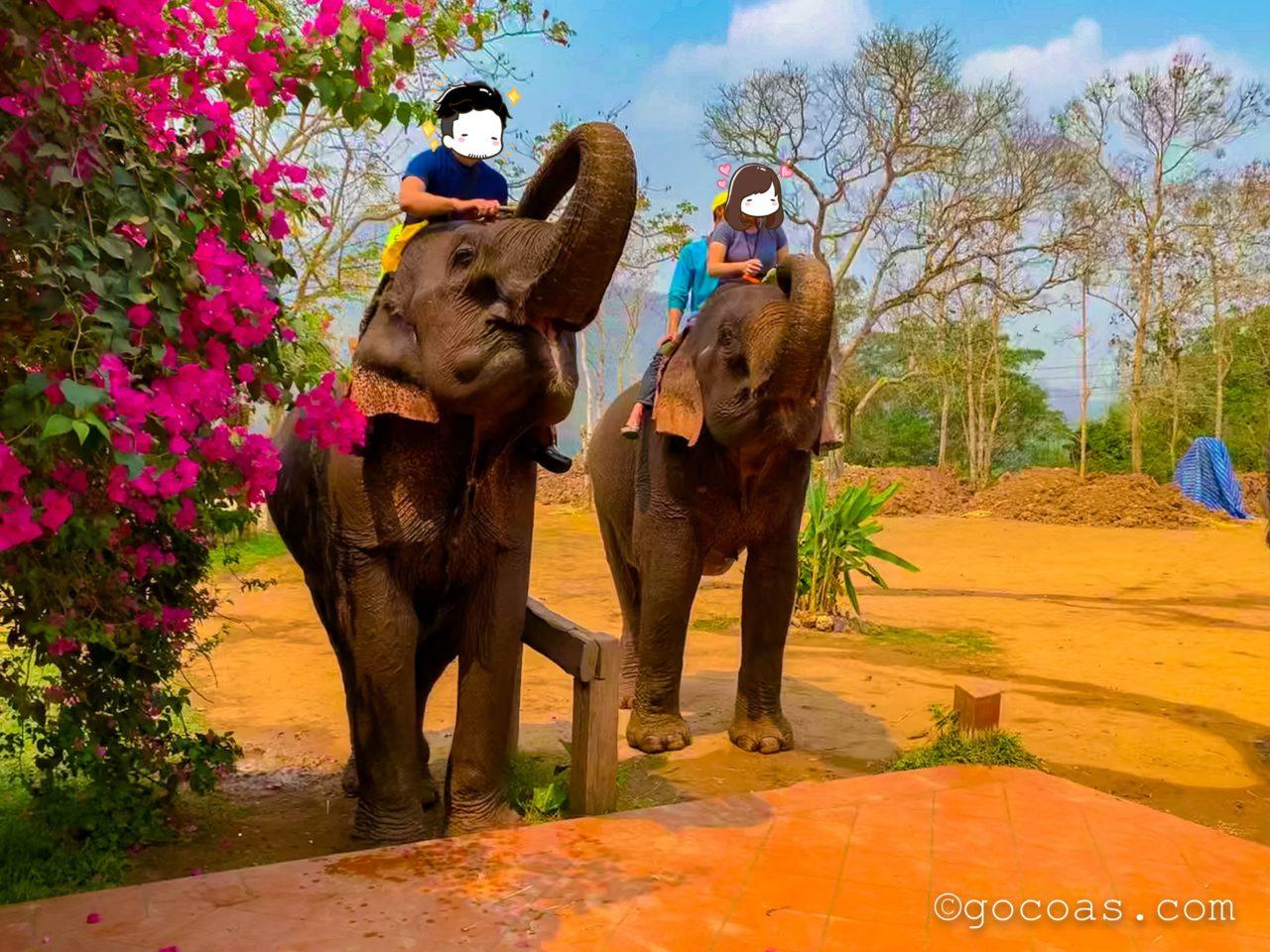 象使い体験の2頭の象と夫婦2人