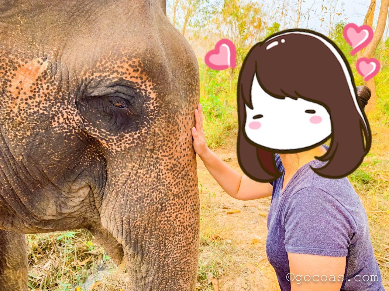 象使い体験での象とのお別れ