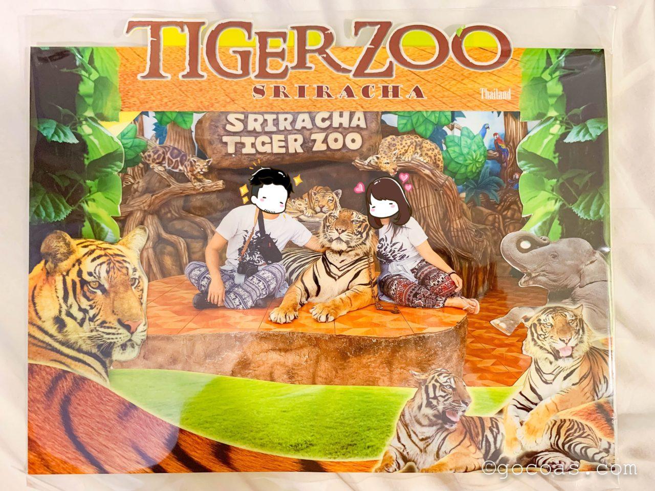シラチャタイガーズーでトラのと映るこーしとあいりの写真